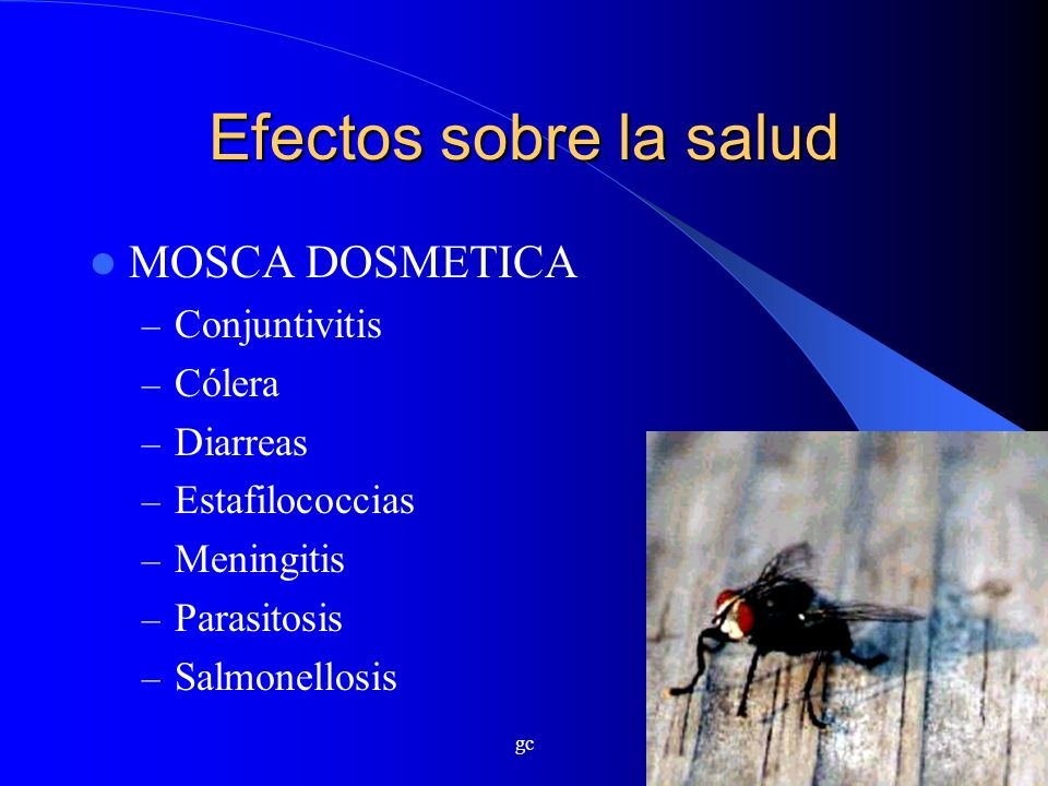 Efectos sobre la salud MOSCA DOSMETICA Conjuntivitis Cólera Diarreas