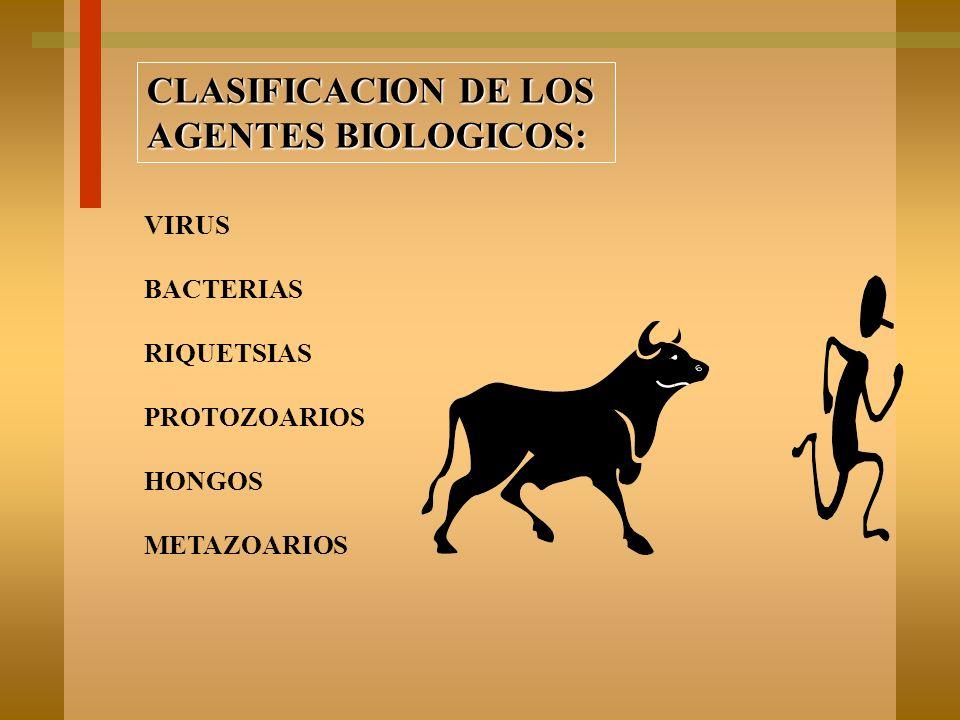 CLASIFICACION DE LOS AGENTES BIOLOGICOS: VIRUS BACTERIAS RIQUETSIAS