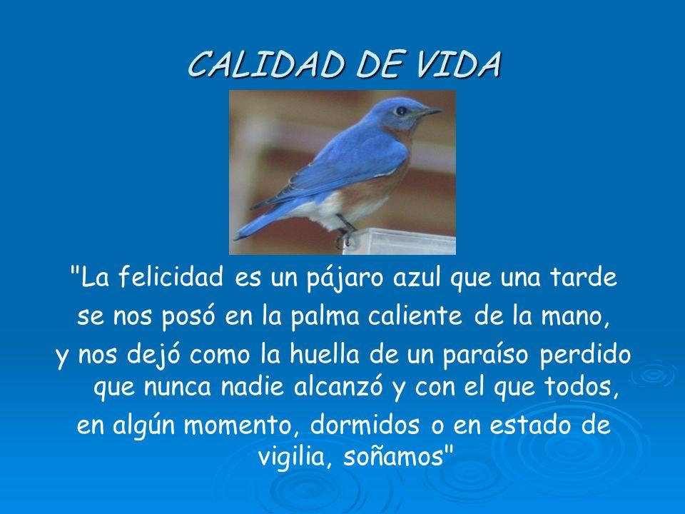 CALIDAD DE VIDA La felicidad es un pájaro azul que una tarde