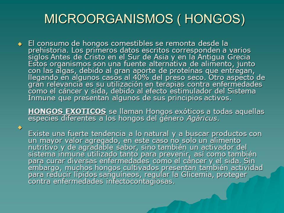 MICROORGANISMOS ( HONGOS)