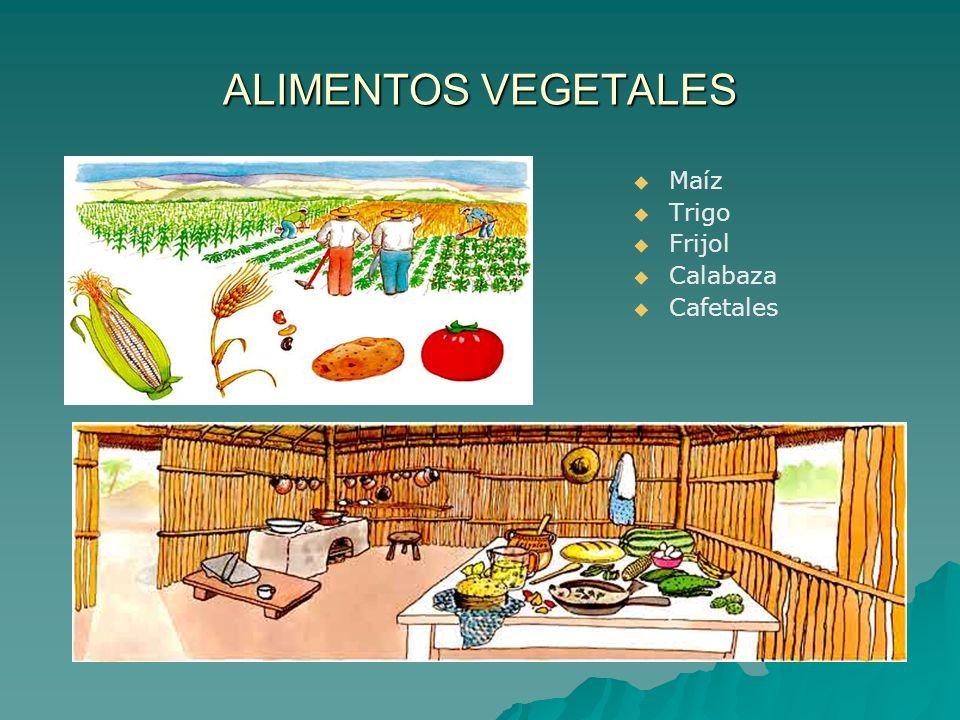 ALIMENTOS VEGETALES Maíz Trigo Frijol Calabaza Cafetales