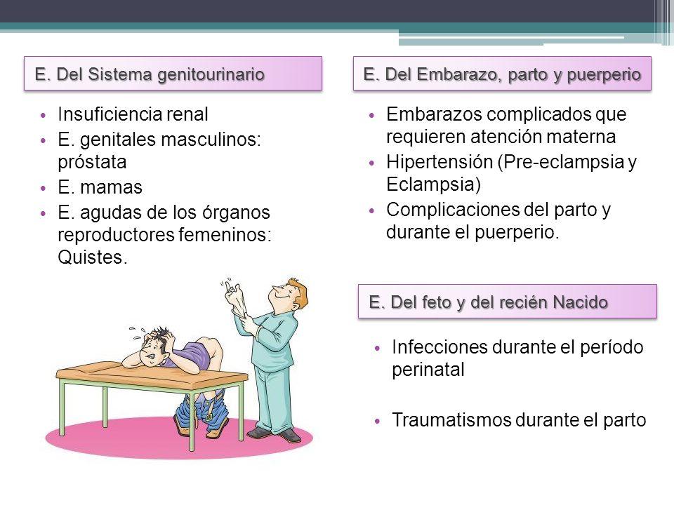 E. genitales masculinos: próstata E. mamas