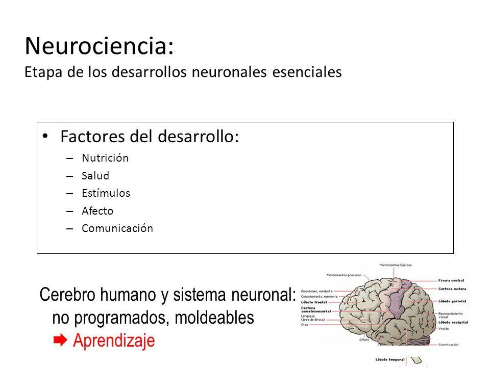 Neurociencia: Etapa de los desarrollos neuronales esenciales