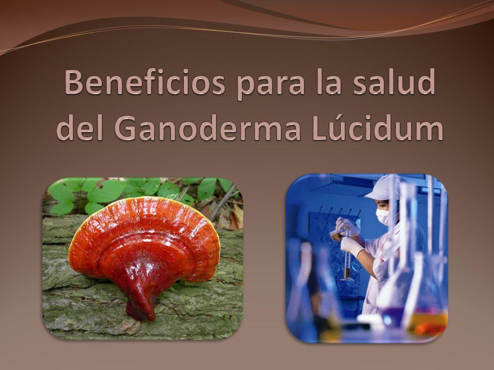 Beneficios para la salud del Ganoderma Lúcidum