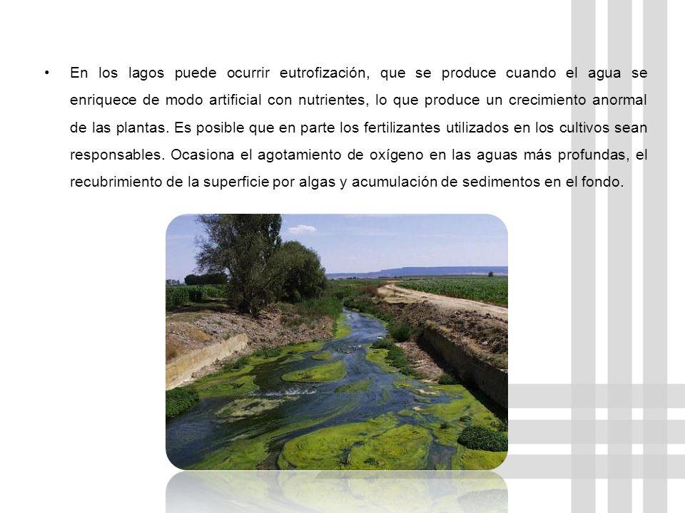 En los lagos puede ocurrir eutrofización, que se produce cuando el agua se enriquece de modo artificial con nutrientes, lo que produce un crecimiento anormal de las plantas.