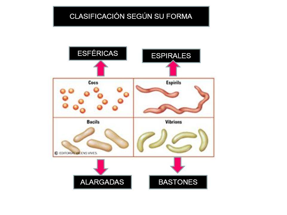 CLASIFICACIÓN SEGÚN SU FORMA