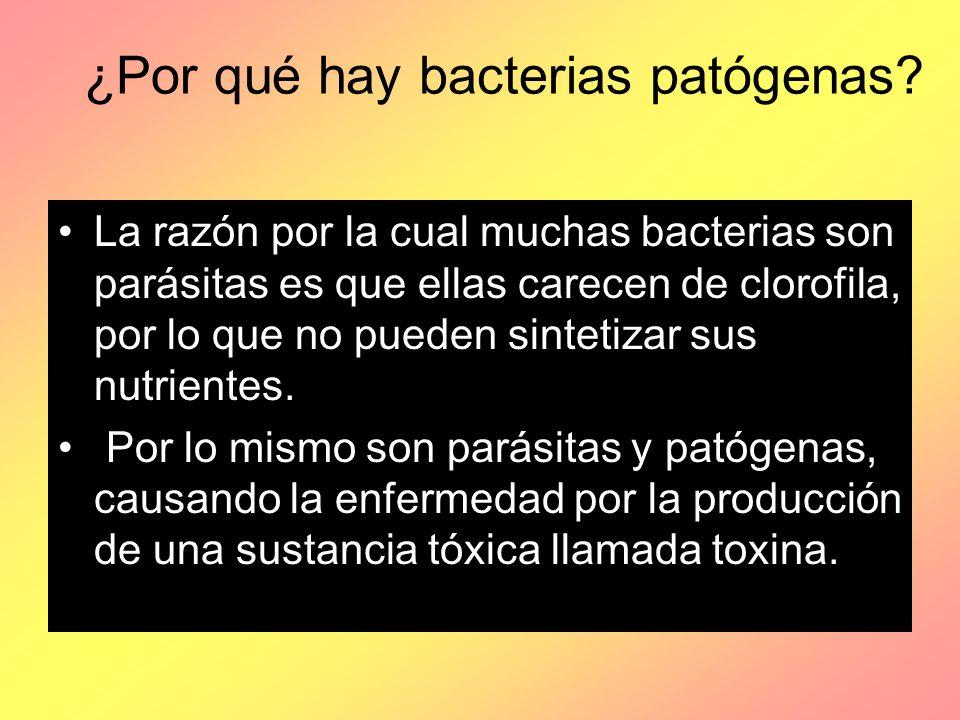 ¿Por qué hay bacterias patógenas