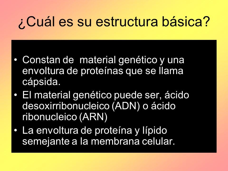 ¿Cuál es su estructura básica