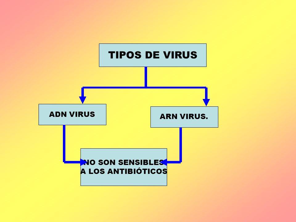 TIPOS DE VIRUS ADN VIRUS ARN VIRUS. NO SON SENSIBLES