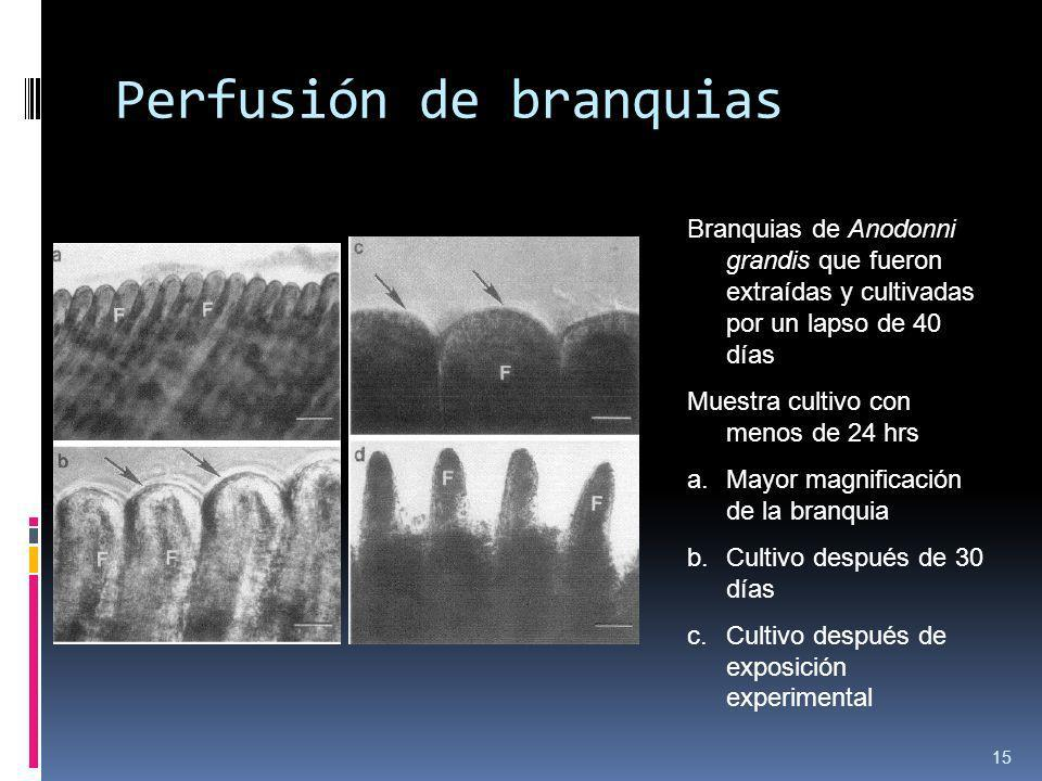 Perfusión de branquias