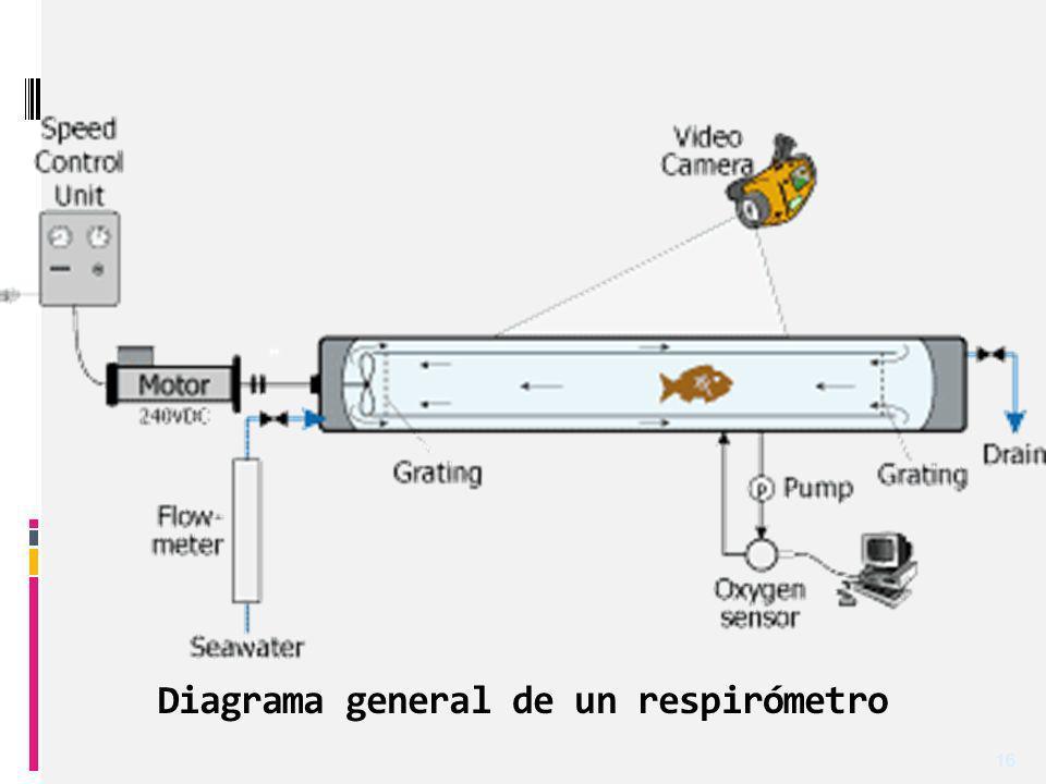 Diagrama general de un respirómetro
