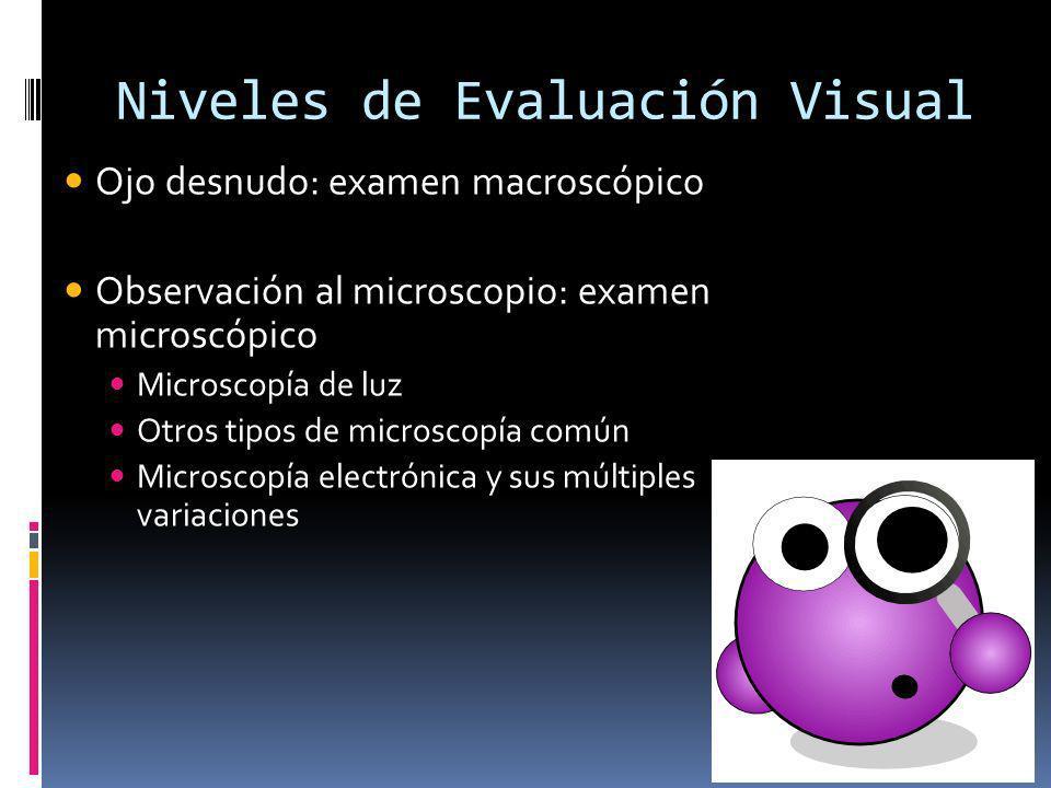 Niveles de Evaluación Visual