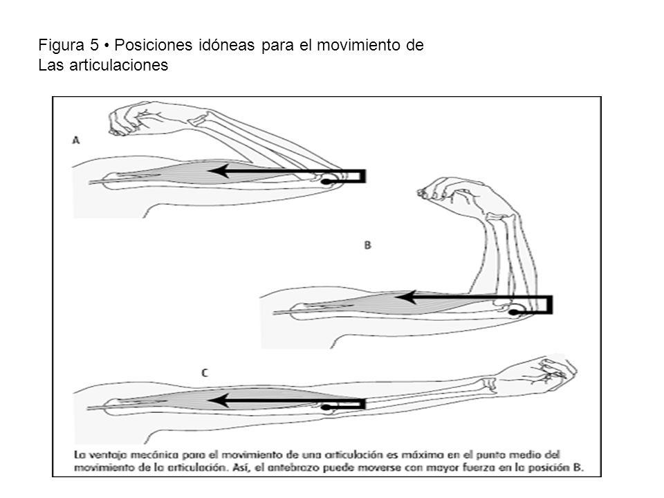 Figura 5 • Posiciones idóneas para el movimiento de Las articulaciones