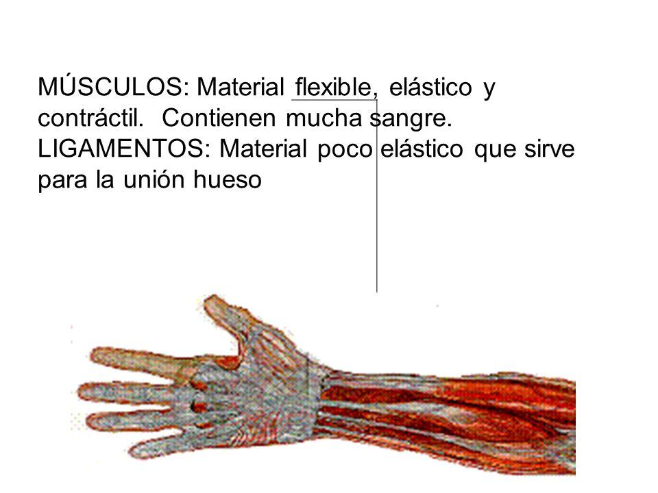 LIGAMENTOS: Material poco elástico que sirve para la unión hueso
