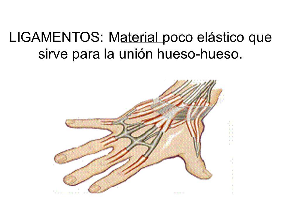 LIGAMENTOS: Material poco elástico que sirve para la unión hueso-hueso.