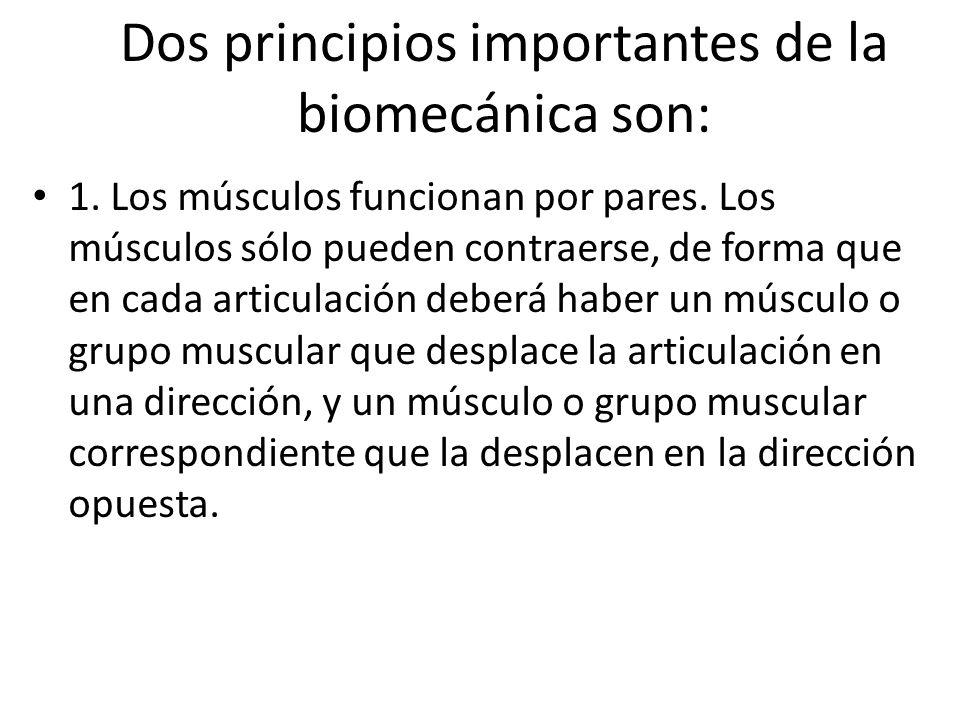 Dos principios importantes de la biomecánica son: