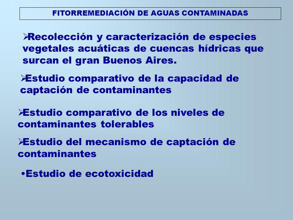 FITORREMEDIACIÓN DE AGUAS CONTAMINADAS