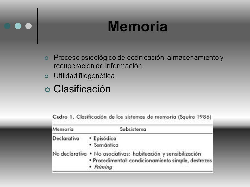 Memoria Clasificación