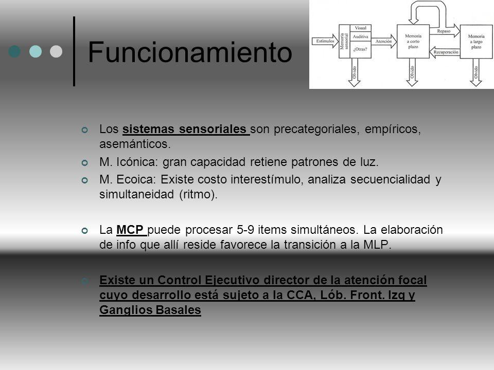 Funcionamiento Los sistemas sensoriales son precategoriales, empíricos, asemánticos. M. Icónica: gran capacidad retiene patrones de luz.