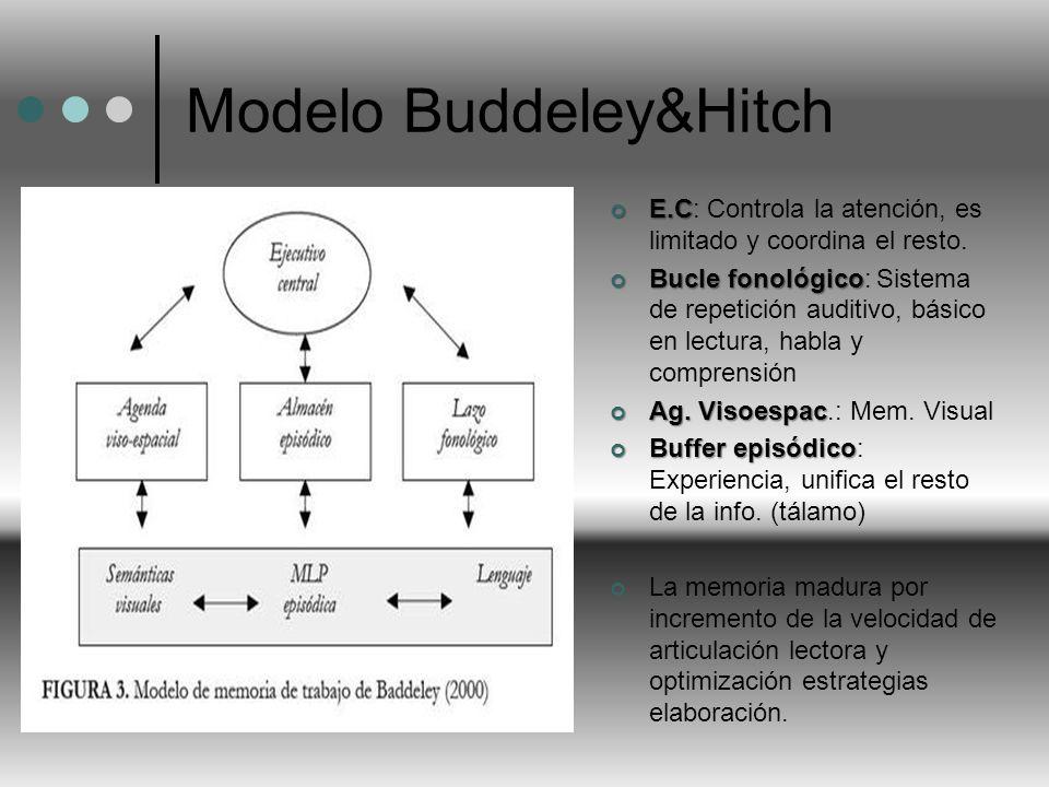 Modelo Buddeley&Hitch
