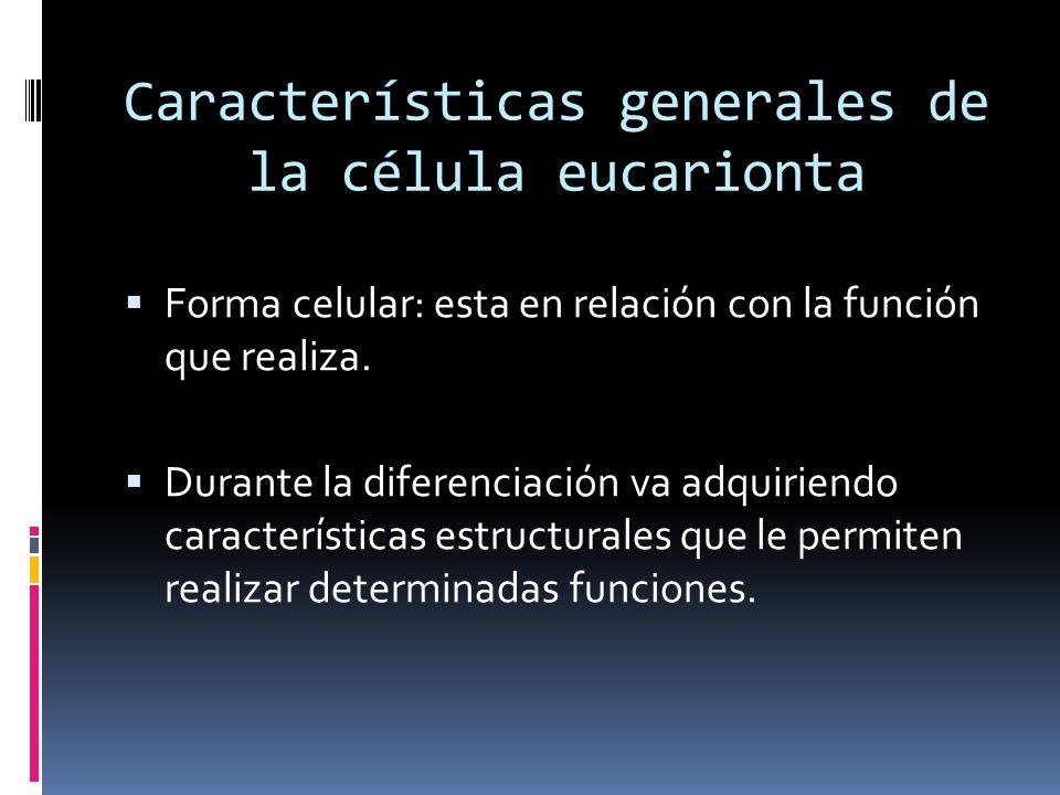 Características generales de la célula eucarionta