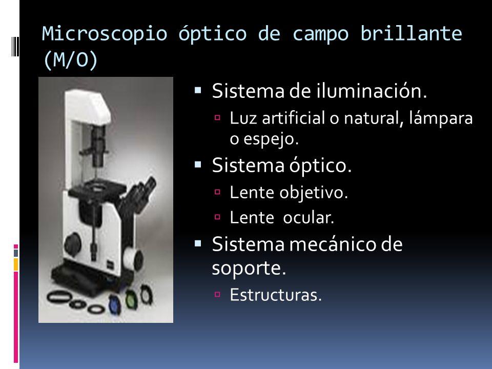 Microscopio óptico de campo brillante (M/O)