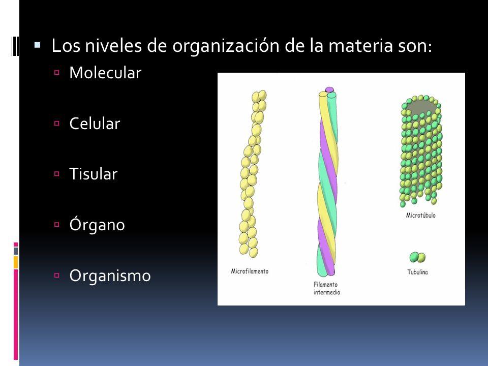Los niveles de organización de la materia son: