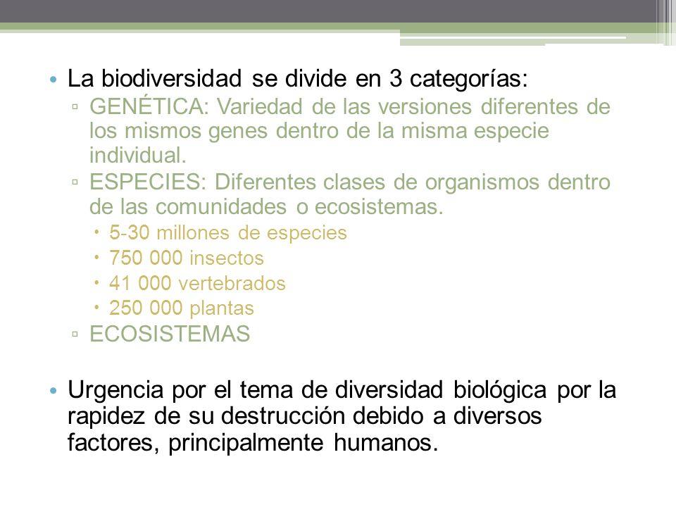 La biodiversidad se divide en 3 categorías: