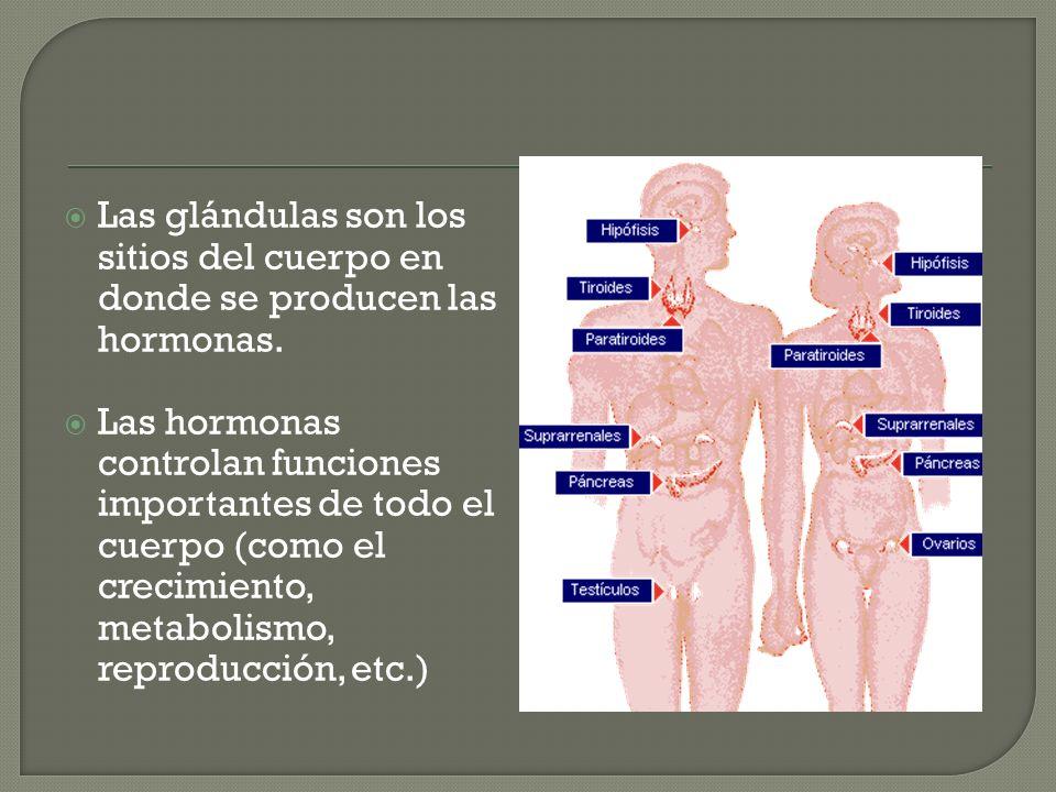 Las glándulas son los sitios del cuerpo en donde se producen las hormonas.