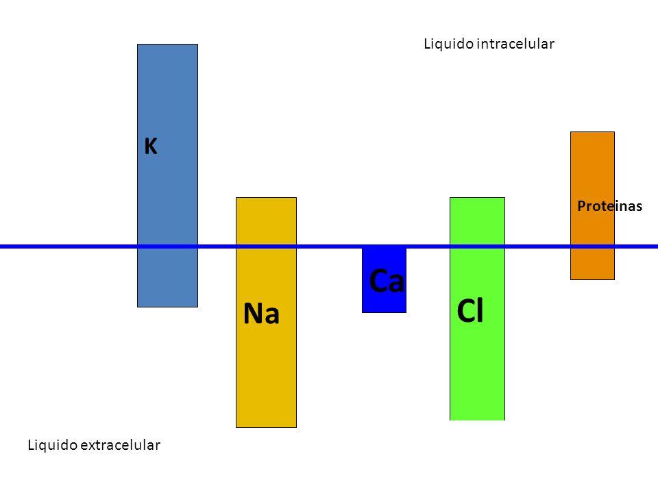 Cl Ca Na K Liquido intracelular Proteinas Liquido extracelular