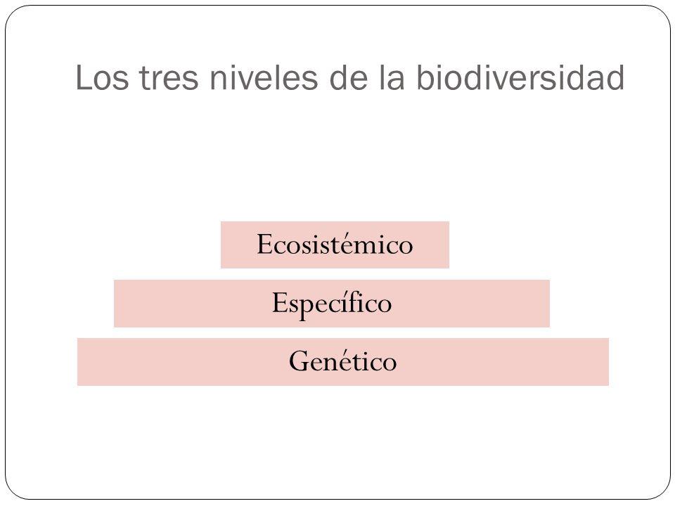 Los tres niveles de la biodiversidad