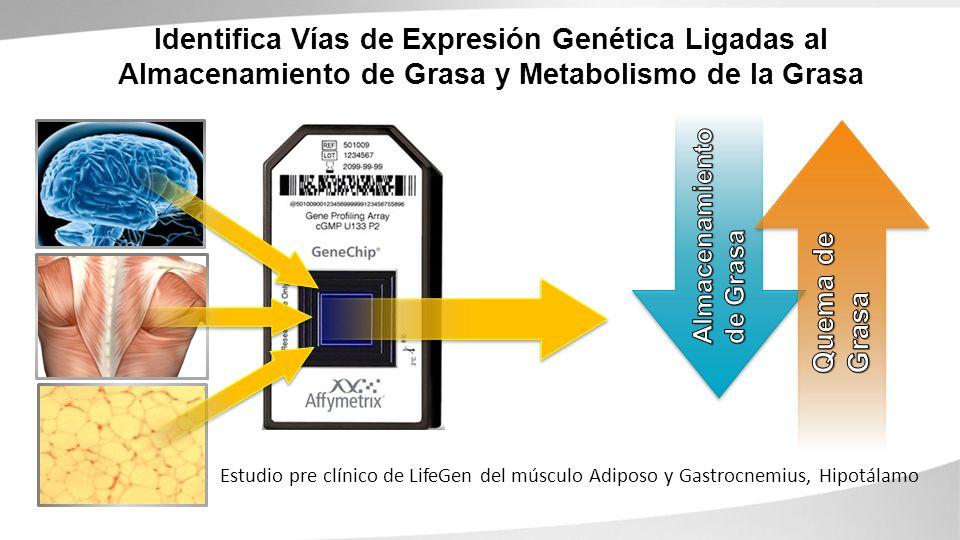 Identifica Vías de Expresión Genética Ligadas al Almacenamiento de Grasa y Metabolismo de la Grasa