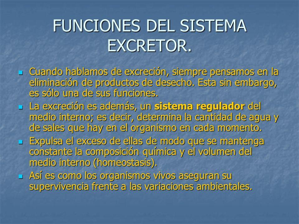 FUNCIONES DEL SISTEMA EXCRETOR.