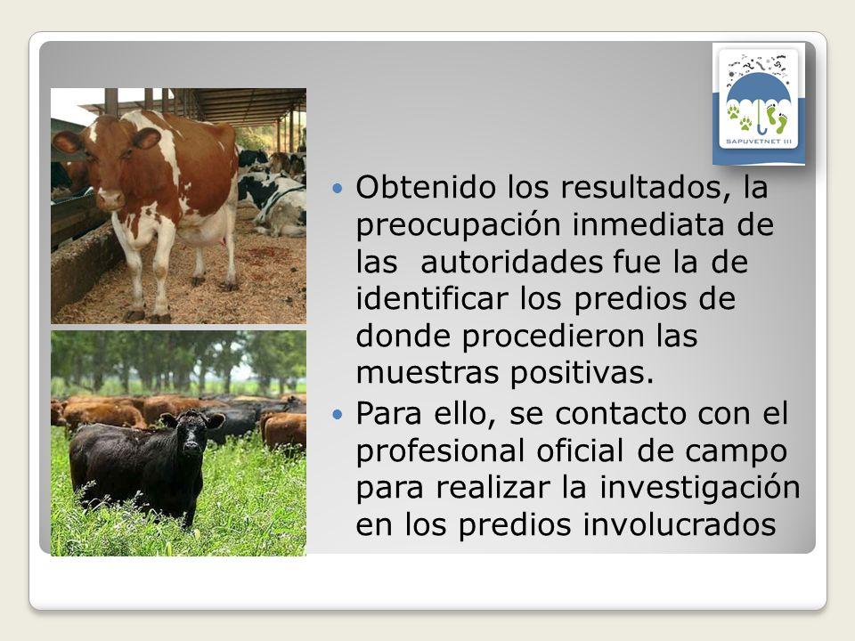 Obtenido los resultados, la preocupación inmediata de las autoridades fue la de identificar los predios de donde procedieron las muestras positivas.