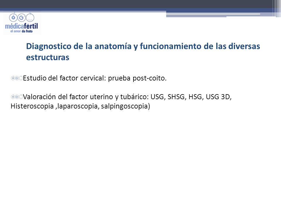 Diagnostico de la anatomía y funcionamiento de las diversas