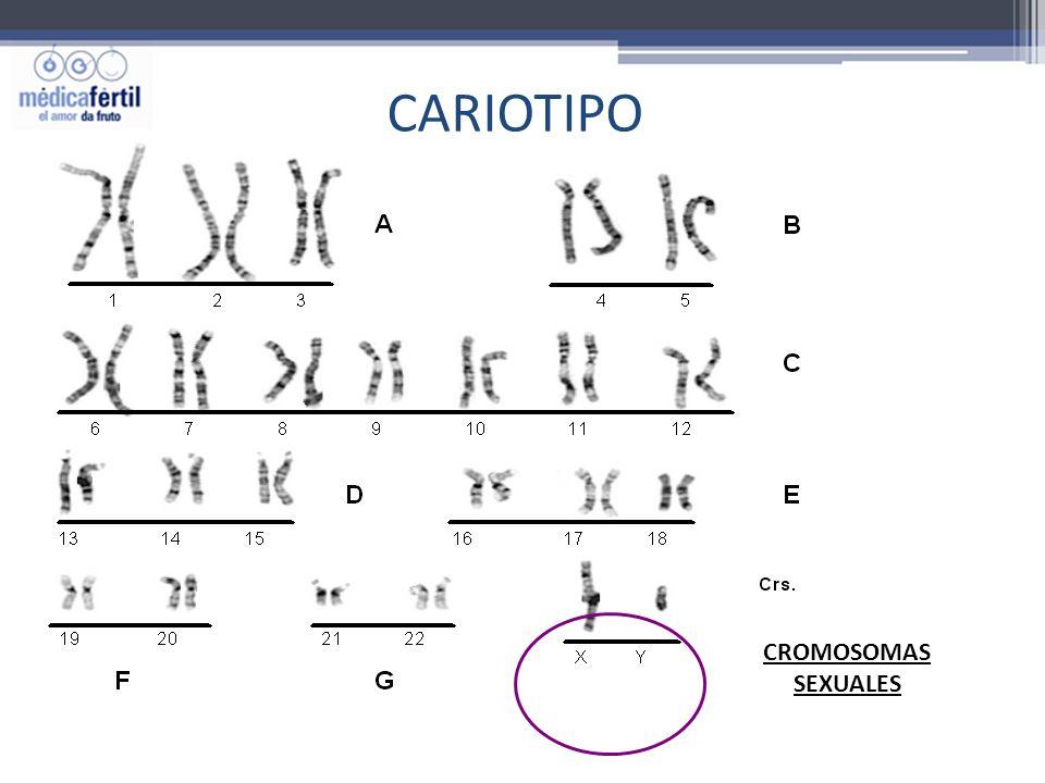 CARIOTIPO CROMOSOMAS SEXUALES
