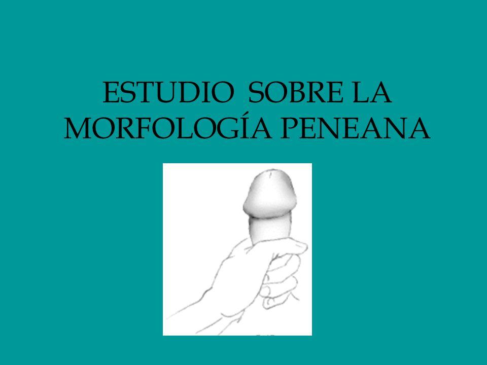 ESTUDIO SOBRE LA MORFOLOGÍA PENEANA