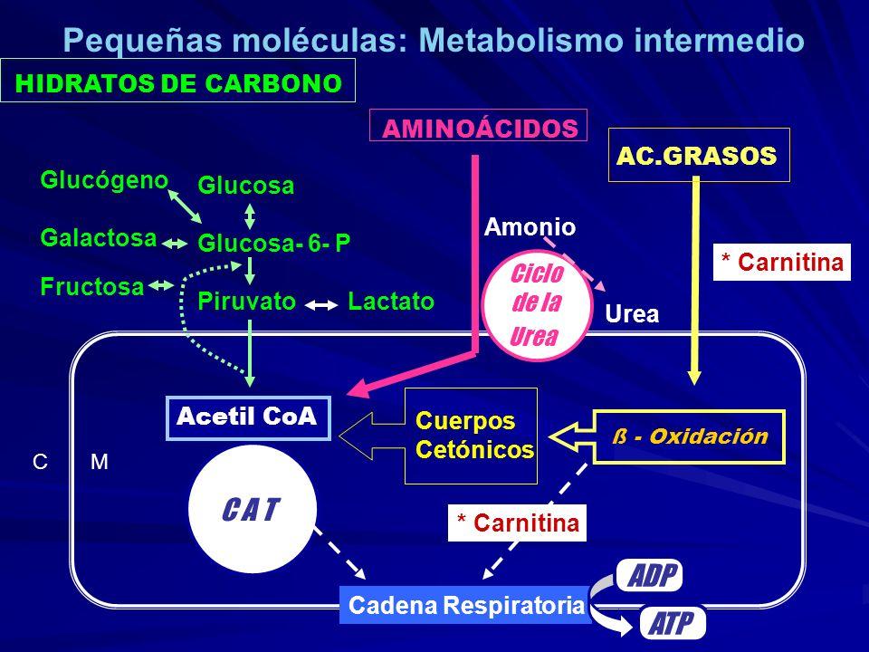 Pequeñas moléculas: Metabolismo intermedio