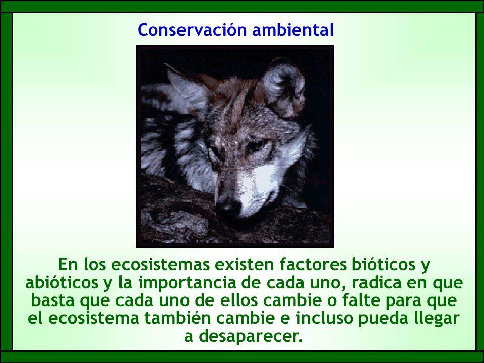 Conservación ambiental
