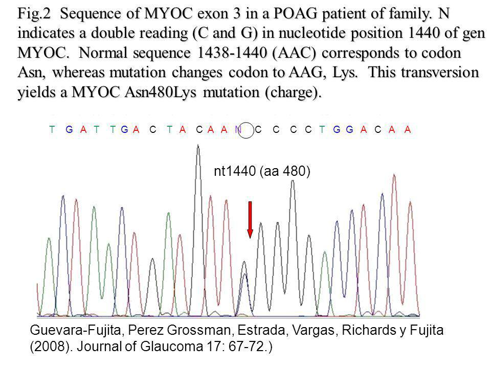 Fig. 2 Sequence of MYOC exon 3 in a POAG patient of family