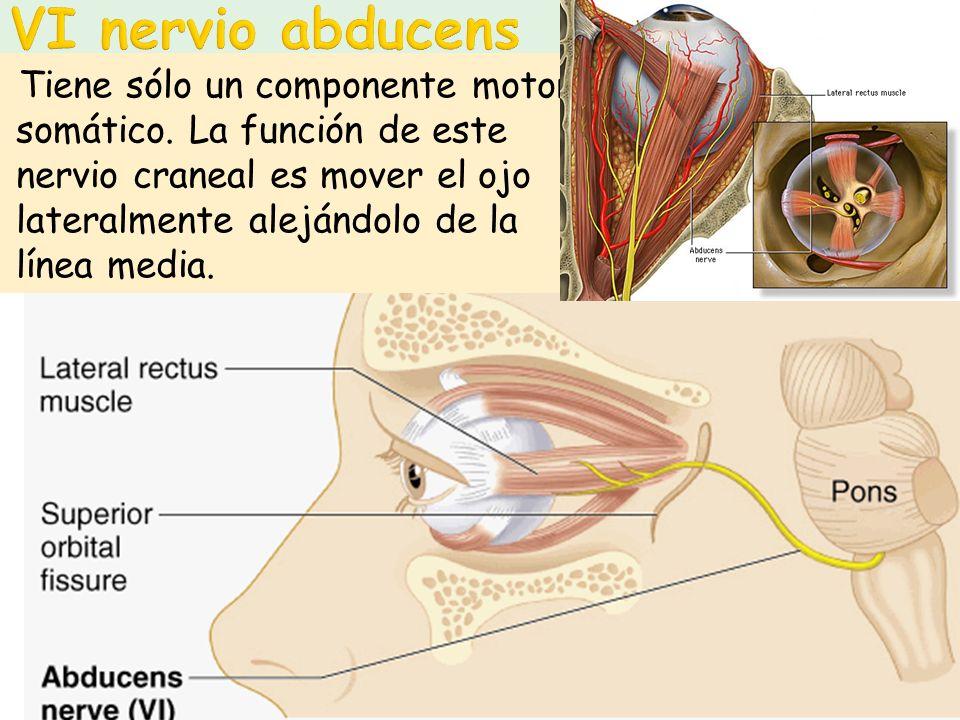 VI nervio abducens