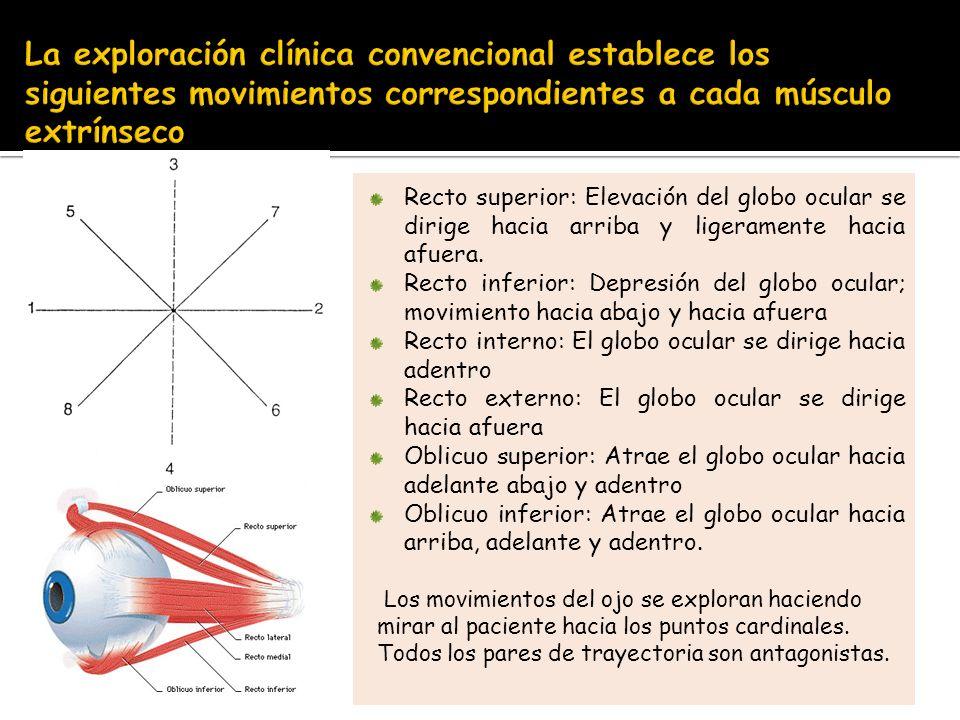 La exploración clínica convencional establece los siguientes movimientos correspondientes a cada músculo extrínseco