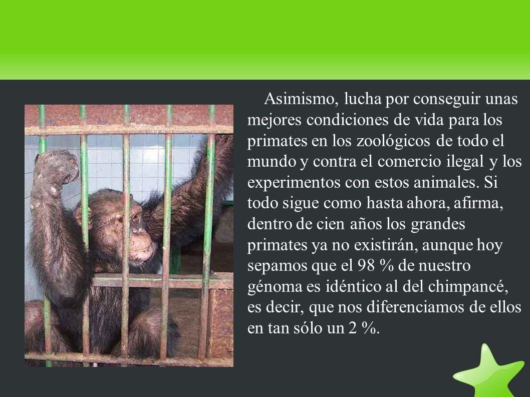 Asimismo, lucha por conseguir unas mejores condiciones de vida para los primates en los zoológicos de todo el mundo y contra el comercio ilegal y los experimentos con estos animales.