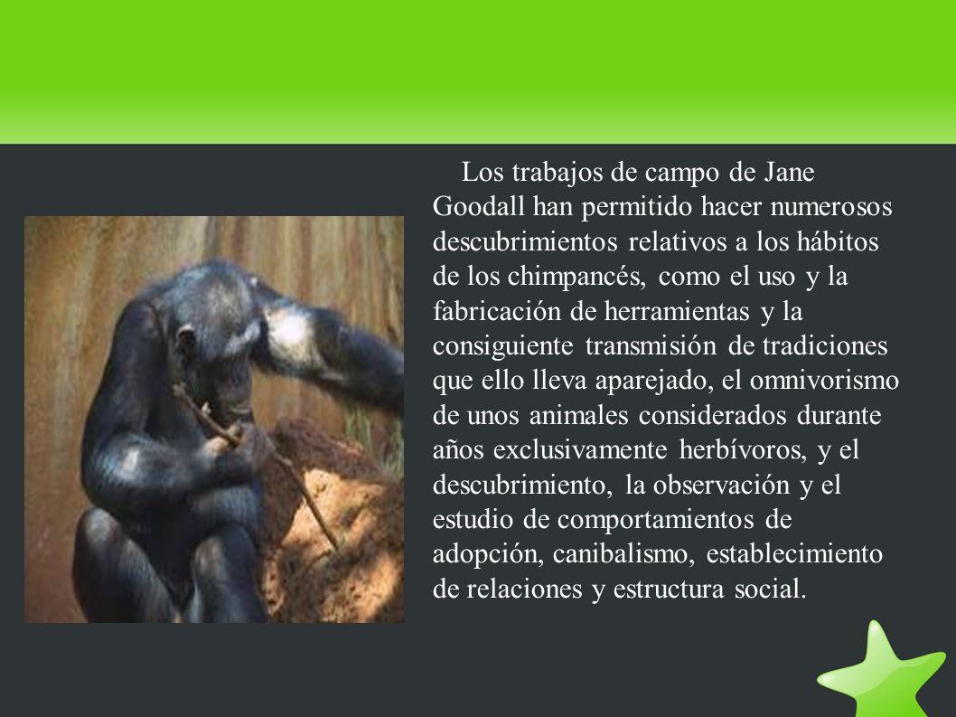 Los trabajos de campo de Jane Goodall han permitido hacer numerosos descubrimientos relativos a los hábitos de los chimpancés, como el uso y la fabricación de herramientas y la consiguiente transmisión de tradiciones que ello lleva aparejado, el omnivorismo de unos animales considerados durante años exclusivamente herbívoros, y el descubrimiento, la observación y el estudio de comportamientos de adopción, canibalismo, establecimiento de relaciones y estructura social.