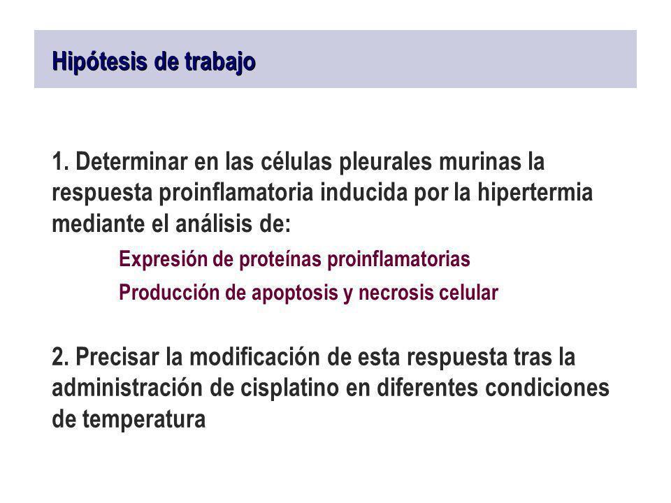 Expresión de proteínas proinflamatorias