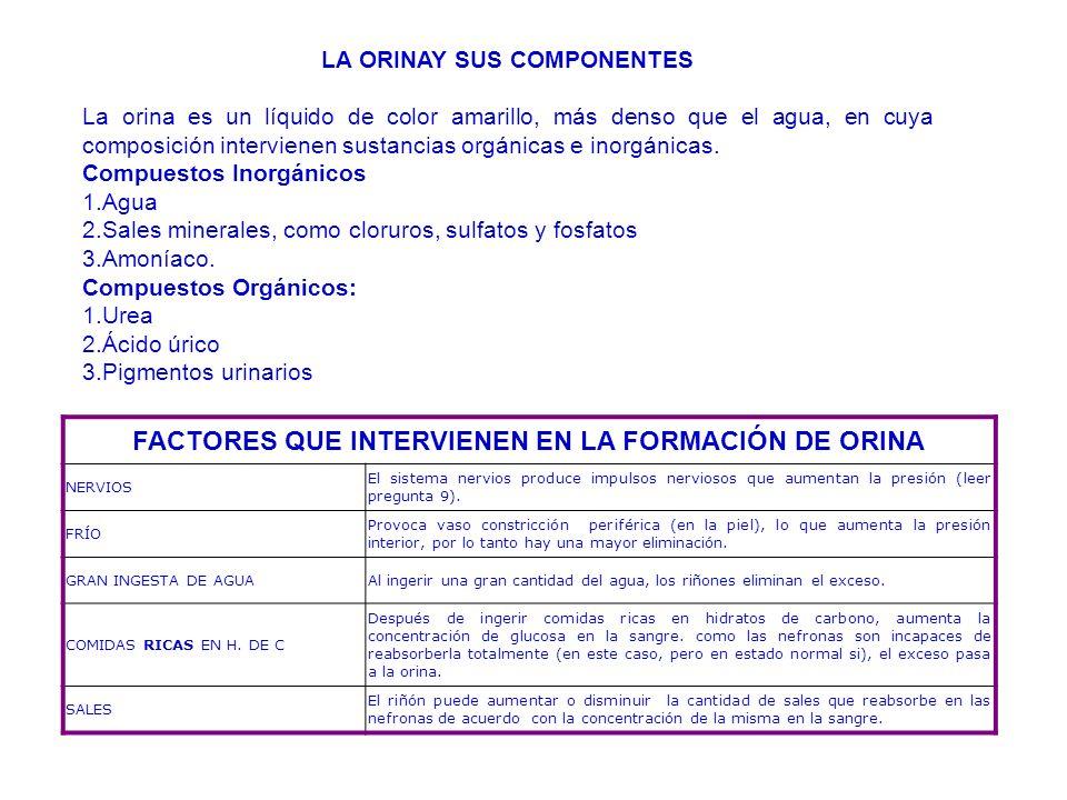 LA ORINAY SUS COMPONENTES