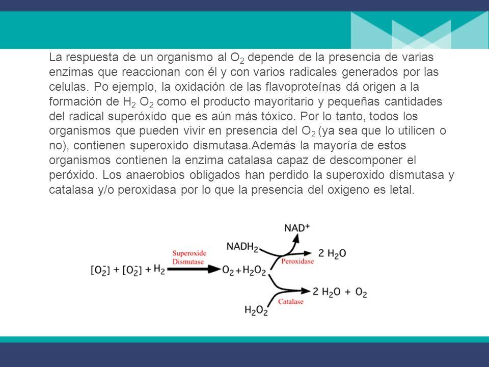 La respuesta de un organismo al O2 depende de la presencia de varias enzimas que reaccionan con él y con varios radicales generados por las celulas.