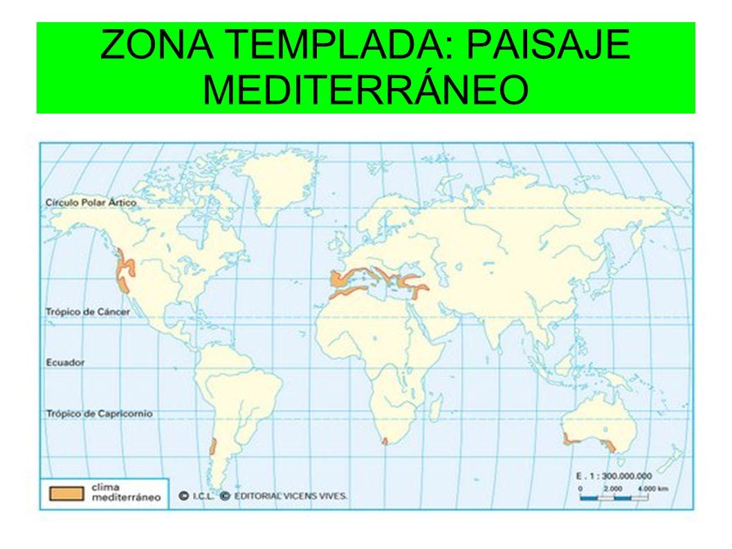 ZONA TEMPLADA: PAISAJE MEDITERRÁNEO