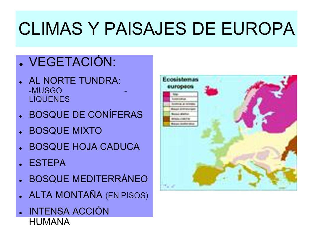 Climas y paisajes de la tierra ppt video online descargar - Pisos en estepa ...