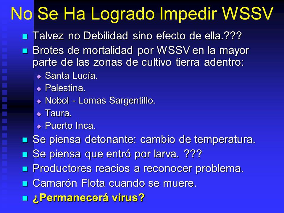 No Se Ha Logrado Impedir WSSV